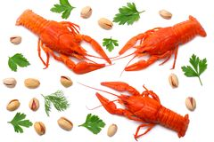 Crawfish isolated on white background. Beer brewery concept. Beer background. top view stock images