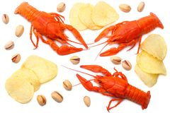 Crawfish isolated on white background. Beer brewery concept. Beer background. top view stock photos