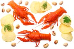 Crawfish isolated on white background. Beer brewery concept. Beer background. top view royalty free stock images