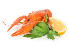 Crawfish and lemon Royalty Free Stock Images
