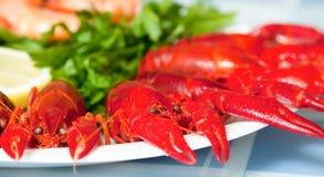 Crawfish on plate close up Stock Image