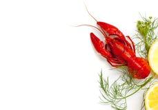Crawfish Stock Photography