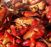 Crawfish Stock Photo