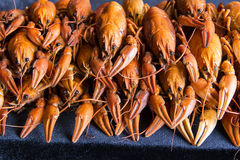 crawfishes много стоковое изображение rf