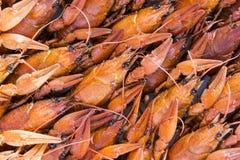 crawfishes много стоковые фотографии rf