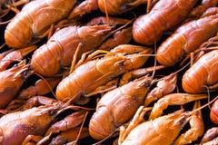 crawfishes много стоковое фото rf