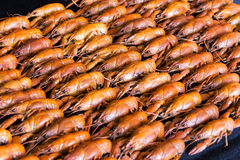 crawfishes много стоковые фото