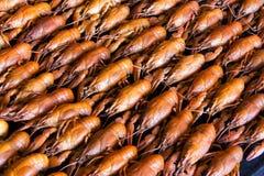 crawfishes много стоковая фотография rf