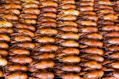 crawfishes много стоковые изображения
