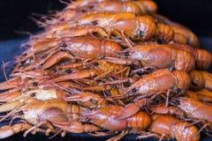 crawfishes много стоковое фото
