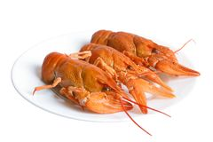Crawfishes. On plate isolated on the white background Royalty Free Stock Photo