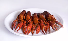 Crawfishes stockbild