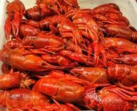 Crawfishes Royalty-vrije Stock Foto's