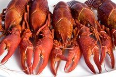 Crawfishes Stock Photography
