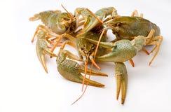 Crawfishes crus Fotos de Stock