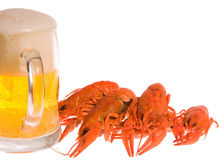 Crawfishes and mug of beer Royalty Free Stock Photo