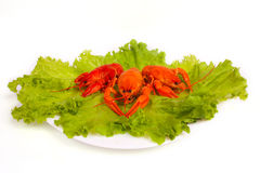 Crawfishes on plate Royalty Free Stock Photos