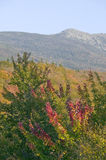 Crawford Notch State Park in the White Mountains, New Hampshire Royalty Free Stock Images