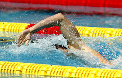 Crawl style swimmer. Male swimmer swimming crawl in a competition swim pool Stock Images