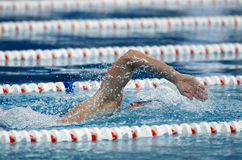 Crawl swimmer. Male swimmer swimming crawl in a competition swim pool Royalty Free Stock Photo