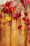 Crawler with red leaves and wooden fence Royalty Free Stock Image