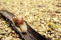 Crawler snail Stock Photo
