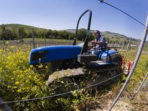 Crawler tractor driver works among the rows of vineyards Royalty Free Stock Photo