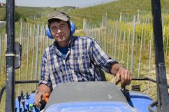 Crawler tractor driver works among the rows of vineyards Stock Image