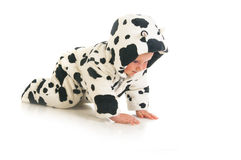 Crawling baby girl in cow costume stock photo