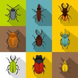 Crawling beetles icons set, flat style. Crawling beetles icons set. Flat illustration of 9 crawling beetles vector icons for web Royalty Free Stock Images