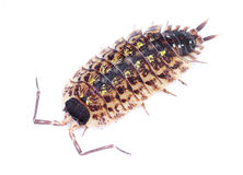 Crawling bug Stock Photos