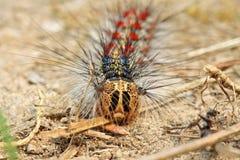 Crawling caterpillar Stock Photo