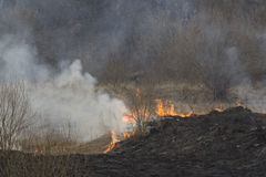 Crawling fire of burning grass Royalty Free Stock Photography