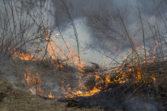 Crawling fire of burning grass Royalty Free Stock Photos