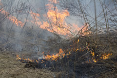 Crawling fire of burning grass Royalty Free Stock Image