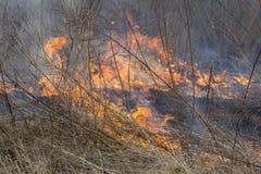 Crawling fire of burning grass Stock Photos