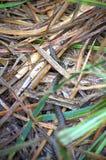 Crawling Gray water snake Royalty Free Stock Photography