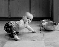 Crawling infant attempts to eat pet dog food Royalty Free Stock Photo