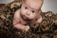 Crawling newborn baby in animal skin.funny little child Royalty Free Stock Photos