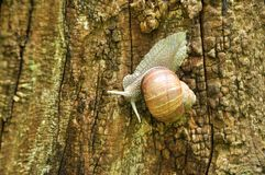 Crawling snail with a house stock photos