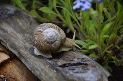 Crawling snail Stock Photos
