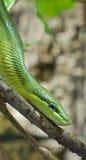 Crawling Snake 1 Royalty Free Stock Photo