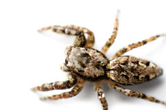 Crawling Spider Stock Photography