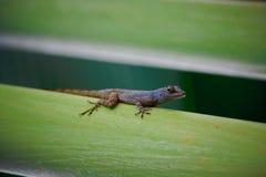 Crawly Critter στοκ εικόνες με δικαίωμα ελεύθερης χρήσης