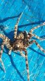 Crawly terrificante Fotografie Stock