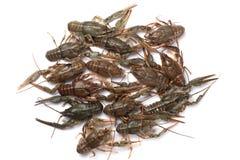 crayfish ?wie?y rakowy na stole w nieociosanym stylu, w g?r? Homara zbli?enie obraz royalty free