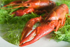 Crayfish, коготь Стоковые Изображения RF