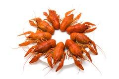 Crayfish на белой плите Стоковые Изображения