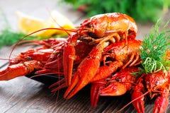 crayfish Ракы кипеть красным цветом на деревянном столе Стоковая Фотография