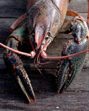Crayfish. A southern delight food Stock Photo